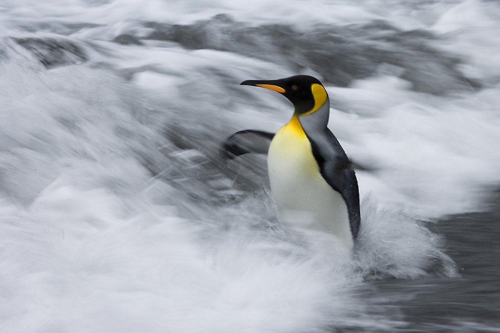 From The National Geographic Endeavour In Antarctica Lindblad